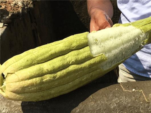 Loofah vrucht